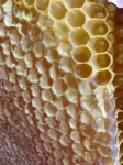 The perfection that his honey comb.