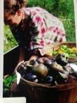 Apprentice Kat loads up the day's pepper harvest, 2011