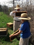Farmers Paul and Anne are a great bee keeping team. So much care is put into providing these creatures with a healthy home on the farm all year round.