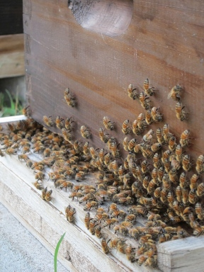 """Worker bees """"on the porch."""""""